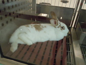 100.11.08 兔子博覽會: