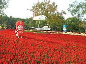 99.01.04 台北花卉展:DSCN0338.JPG