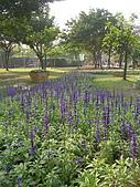 99.01.04 台北花卉展:DSCN0281.jpg