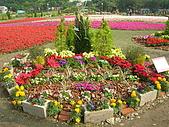 99.01.04 台北花卉展:DSCN0226.JPG
