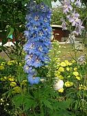 99.01.04 台北花卉展:DSCN0284.jpg