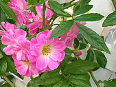 99.01.04 台北花卉展:DSCN0286.JPG