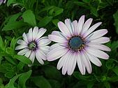 99.01.04 台北花卉展:DSCN0287.jpg