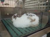 100.11.08 兔子博覽會:斑點兔