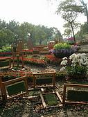 99.01.04 台北花卉展:DSCN0343.jpg