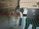 100.11.08 兔子博覽會:牠躲在飼料盒裡!!