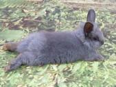 100.11.08 兔子博覽會:真慵懶~
