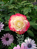 99.01.04 台北花卉展:DSCN0294.jpg