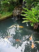 98.11.01 台鐵礁溪泡湯旅:火車站的魚池