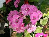 99.01.04 台北花卉展:DSCN0247.JPG