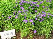 99.01.04 台北花卉展:DSCN0307.JPG