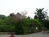 98.03.25-28 平溪+九份+陽明山:DSCN8539.JPG