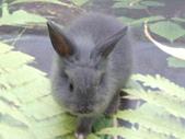 100.11.08 兔子博覽會:多可愛