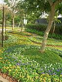 99.01.04 台北花卉展:DSCN0314.jpg