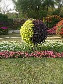99.01.04 台北花卉展:DSCN0371.jpg