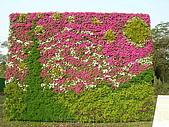 99.01.04 台北花卉展:DSCN0373.JPG