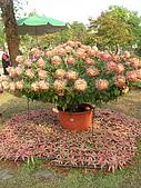 99.01.04 台北花卉展:DSCN0317.jpg