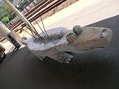 98.10.17 台中行:鱷魚