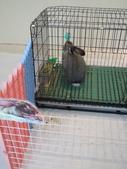 100.11.08 兔子博覽會:很大隻