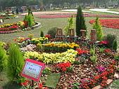 99.01.04 台北花卉展:DSCN0221.JPG