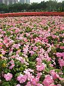 99.01.04 台北花卉展:DSCN0223.jpg