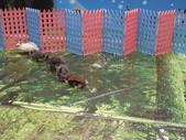 100.11.08 兔子博覽會:這區的小兔子們超活潑~