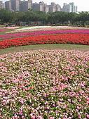 99.01.04 台北花卉展:DSCN0224.jpg