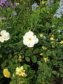 99.01.04 台北花卉展:DSCN0276.jpg
