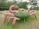 99.01.04 台北花卉展:DSCN0430.JPG
