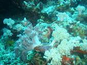 Dive in Philippines菲律賓海底:DSC06690.JPG