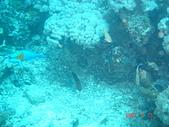 Dive in Philippines菲律賓海底:DSC06670.JPG