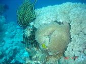 Dive in Philippines菲律賓海底:DSC06684.JPG