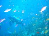 Dive in Philippines菲律賓海底:DSC06639.JPG
