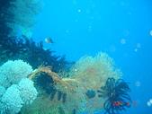 Dive in Philippines菲律賓海底:DSC06689.JPG