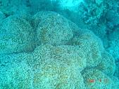 Dive in Philippines菲律賓海底:DSC06683.JPG