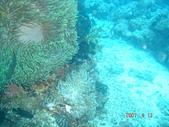 Dive in Philippines菲律賓海底:DSC06676.JPG