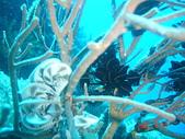 Dive in Philippines菲律賓海底:DSC06688.JPG