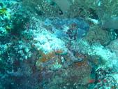 Dive in Philippines菲律賓海底:DSC06681.JPG