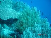 Dive in Philippines菲律賓海底:DSC06891.JPG