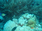 Dive in Philippines菲律賓海底:DSC06674.JPG