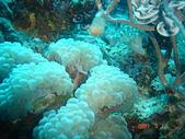 Dive in Philippines菲律賓海底:DSC06687.JPG