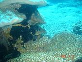 Dive in Philippines菲律賓海底:DSC06679.JPG