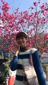 102/02/17 泰安賞櫻:泰安賞櫻