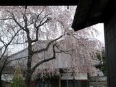 東京:1120670830.jpg