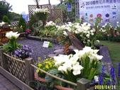 200804台北一遊:1059563267.jpg