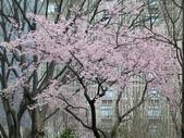 東京:1120670825.jpg