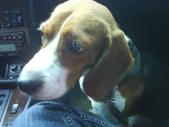 我的狗兒子:1158612235.jpg