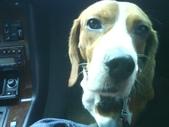 我的狗兒子:1158622061.jpg