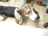 我的狗兒子:1158622068.jpg