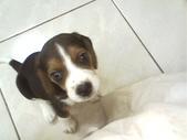我的狗兒子:1158622069.jpg